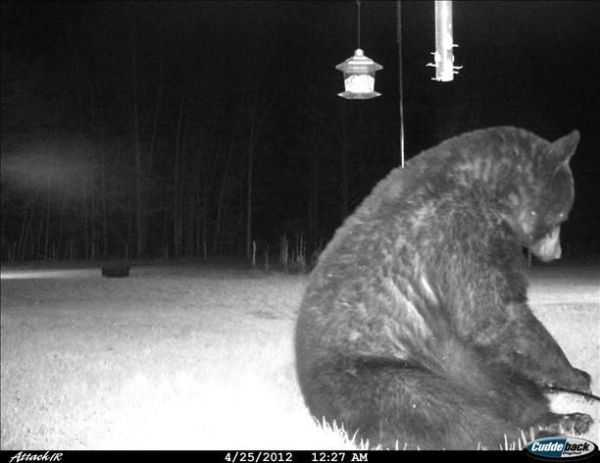 Funny and crazy trail cam pictures 004