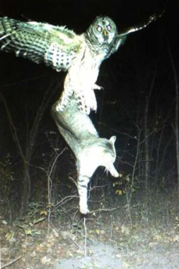 Funny and crazy trail cam pictures 005