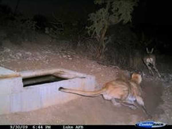 Funny and crazy trail cam pictures 007