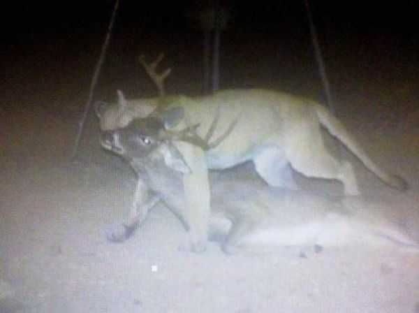 Funny and crazy trail cam pictures 009