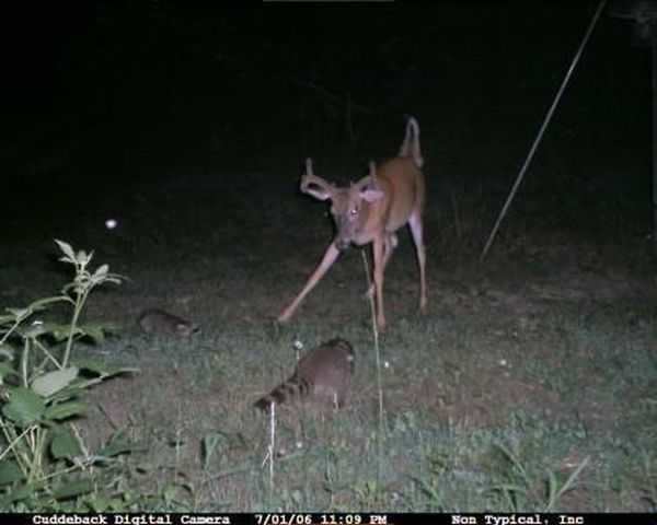 Funny and crazy trail cam pictures 013