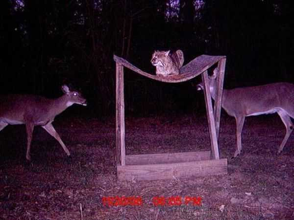 Funny and crazy trail cam pictures 017