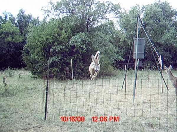 Funny and crazy trail cam pictures 018