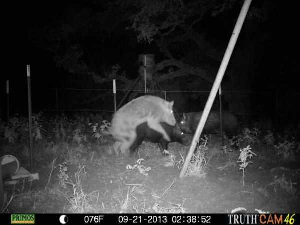 Funny and crazy trail cam pictures 019