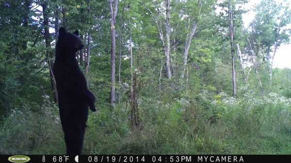 Funny-and-crazy-trail-cam-pictures-022