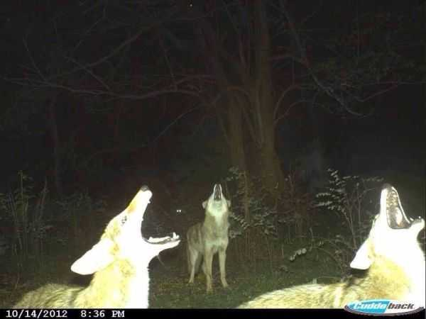 Funny and crazy trail cam pictures 023