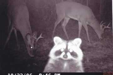 funny and crazy trail cam pictures featured
