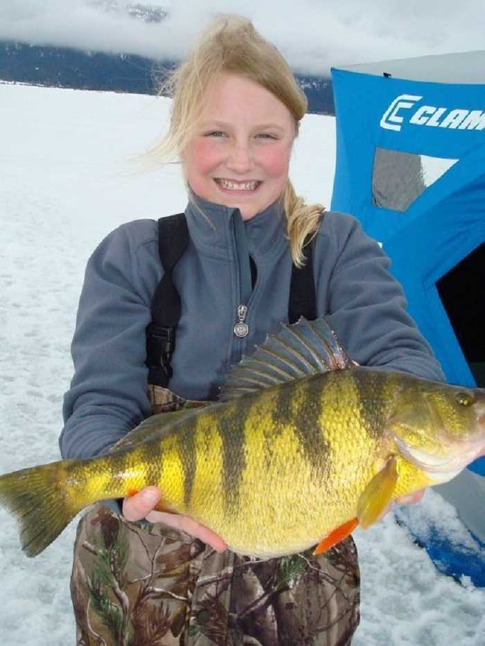 12 Year Old Catches World Record Perch pictures