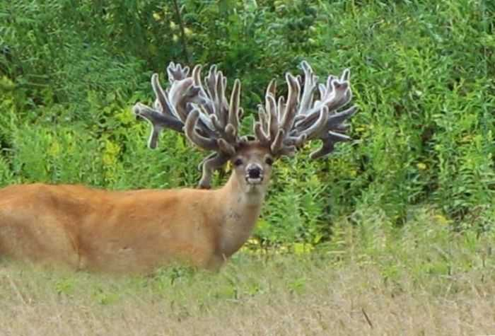Crazy Big Farm Raised Bucks These Bucks Are Ridiculous