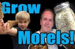 How To Grow Those Yummy Morel Mushrooms - In Your Own Backyard video featured