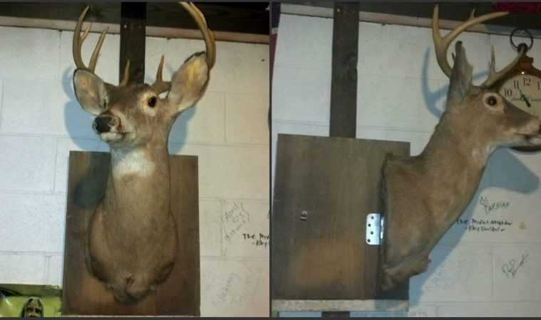 How Build A Hidden Compartment Into Your Deer Shoulder Mount featured