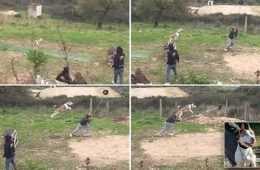 Meet Natsu The Long Jumping Dog - Watch Him Jump Over 20 feet featured
