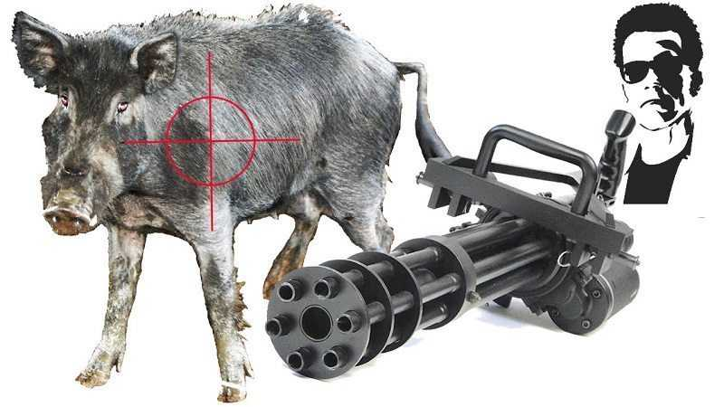 So Is It Ok To Hunt Feral Pigs With A Minigun video featured