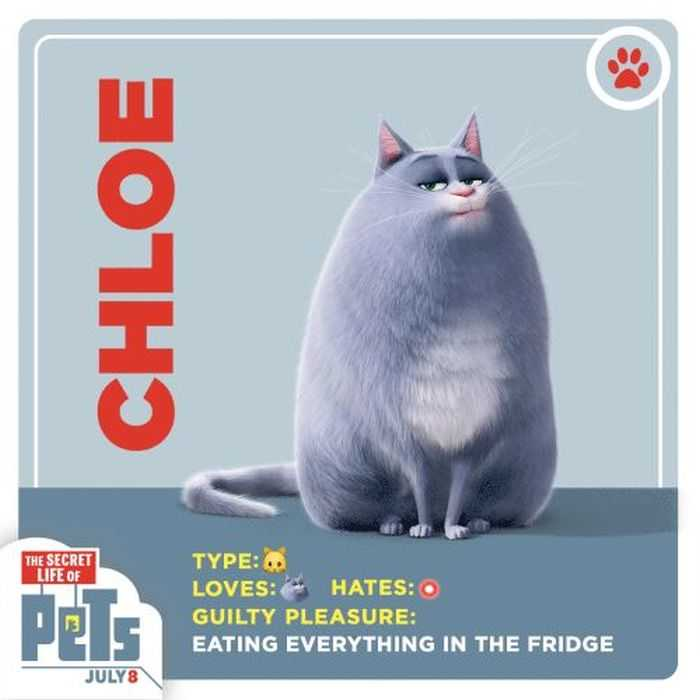 The Secret Life Of Pets - Funny Pictures And Quotes 003