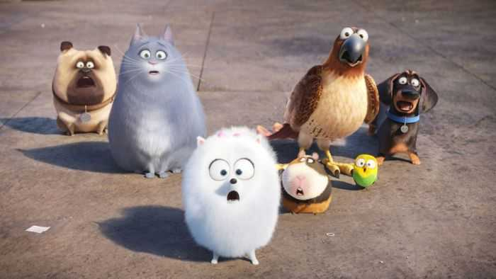 The Secret Life Of Pets - Funny Pictures And Quotes 005
