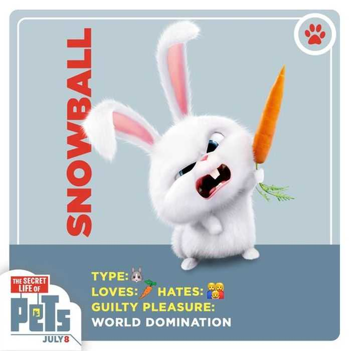 The Secret Life Of Pets - Funny Pictures And Quotes 006