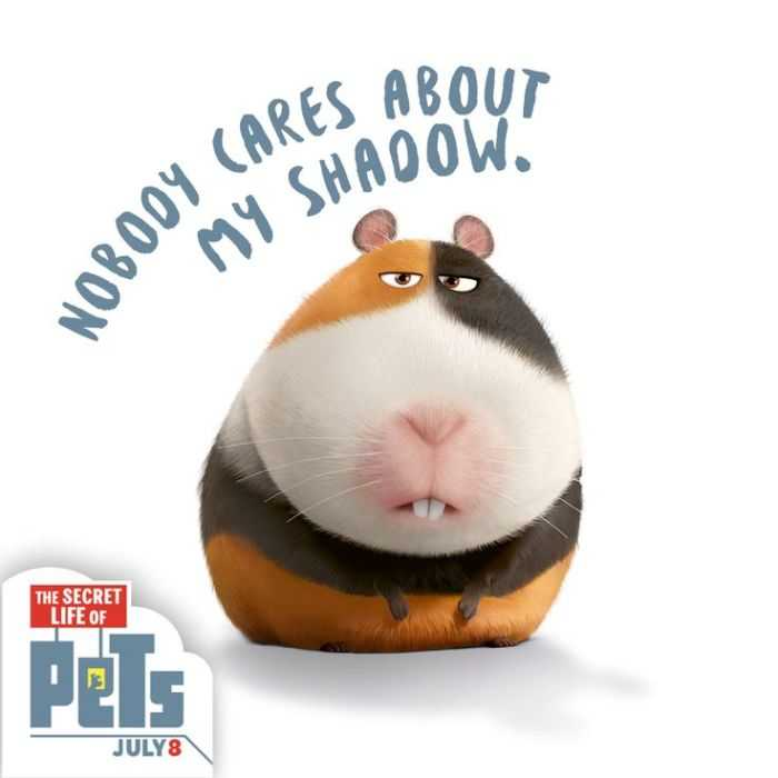 The Secret Life Of Pets Funny Pictures And Quotes