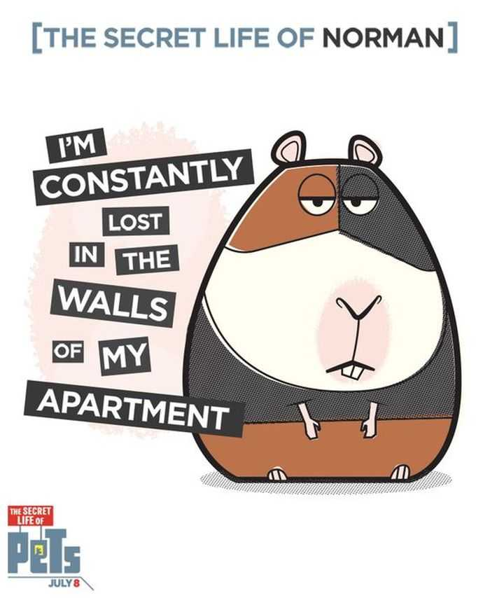 The Secret Life Of Pets - Funny Pictures And Quotes 012