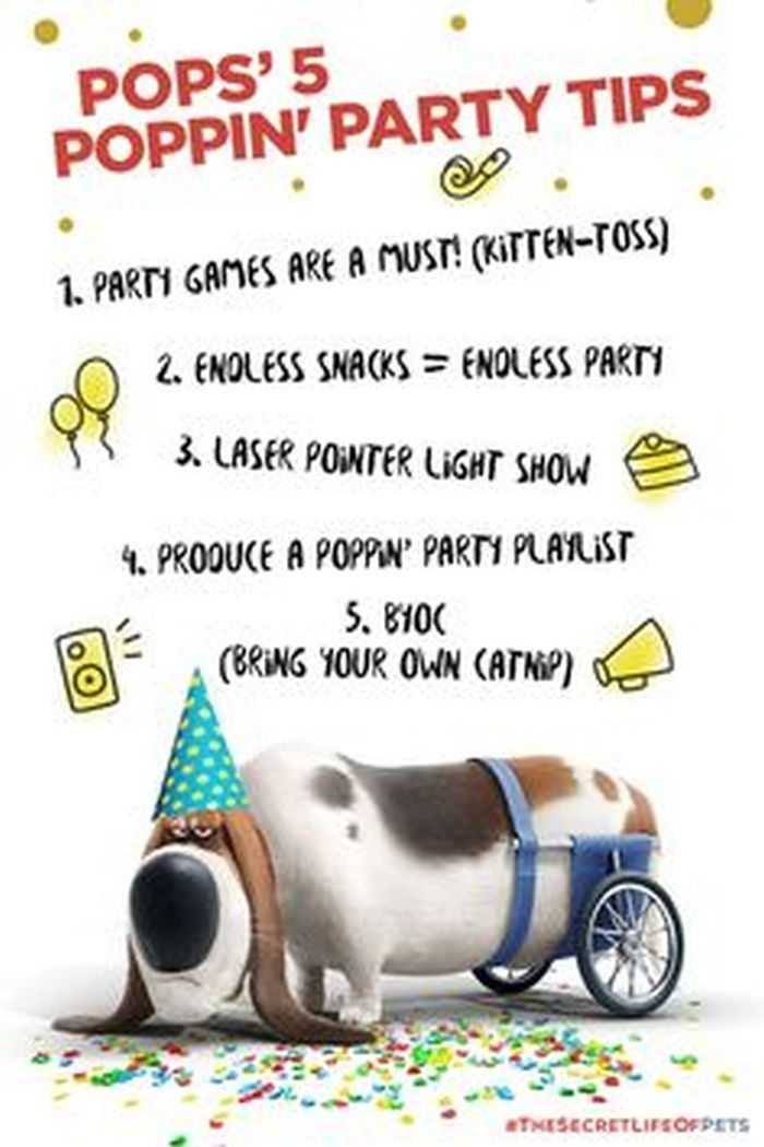 The Secret Life Of Pets - Funny Pictures And Quotes 013