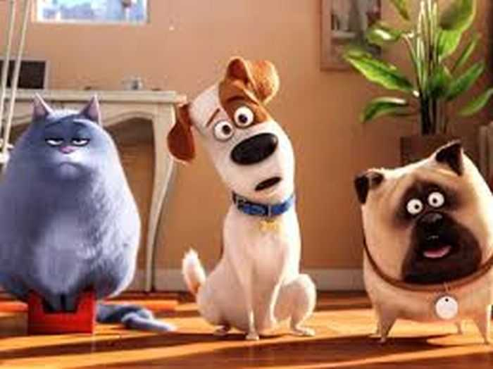 The Secret Life Of Pets - Funny Pictures And Quotes 019