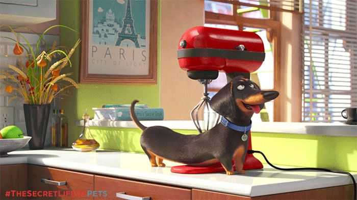 The Secret Life Of Pets - Funny Pictures And Quotes 021