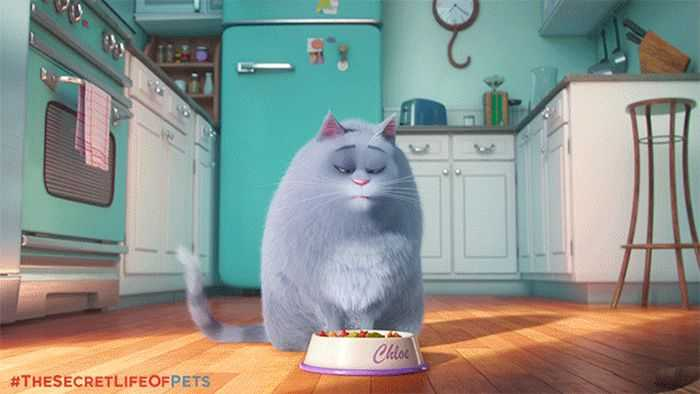 The Secret Life Of Pets - Funny Pictures And Quotes 022