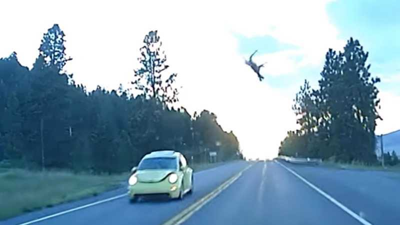 This Little VW Bug Practically Punts This Deer 50 Feet In The Air featured