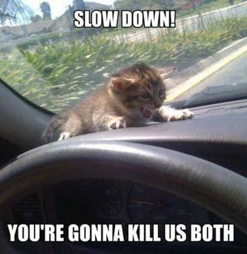 66 Funny Pictures - slow down