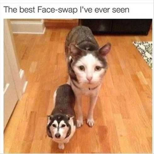 66 Funny Pictures - face swap