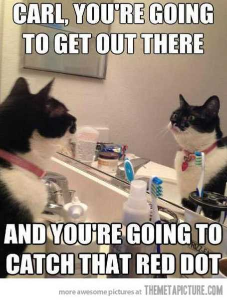 cat-chasing-red-dot-mirror