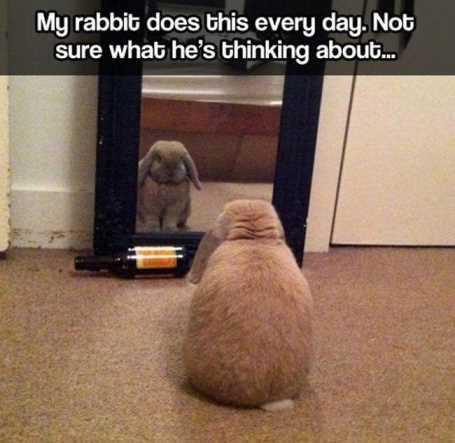 rabbit-staring-at-itself-in-the-mirror