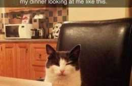 Funny Animal Pictures You're Going To Love 030