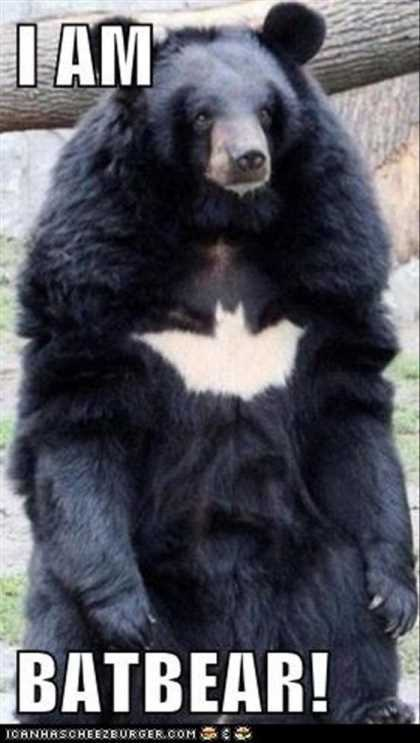 bear looks like batman