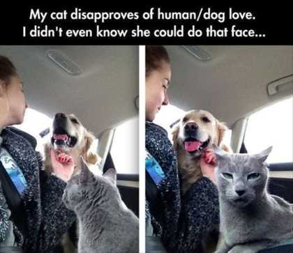 cat hates dog human love