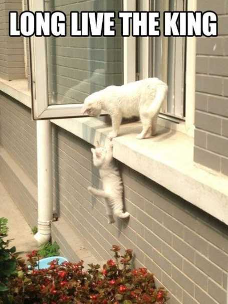 cat-helping-another-cat-climb-in-the-window