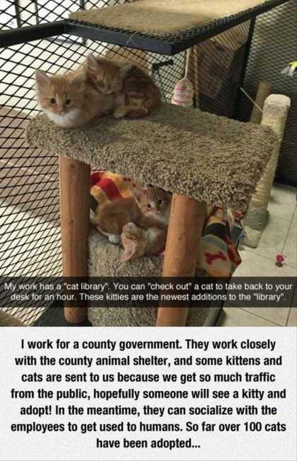 cat hotel thing