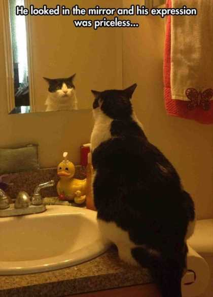 cat looking in the bathroom mirror