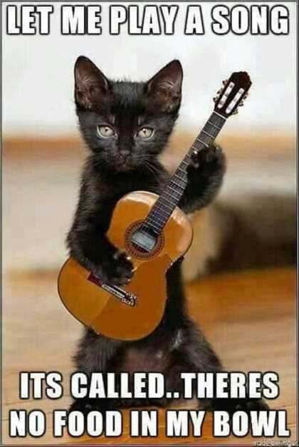 cat playing tiny guitar