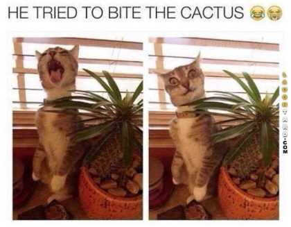 cat tried to be a cactus