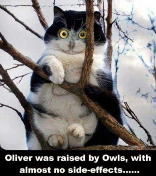 cat-was-raised-by-owls-cat-in-a-tree