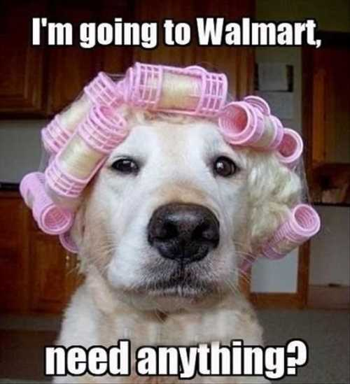 dog-going-to-wal-mart-with-curlers-in-its-hair