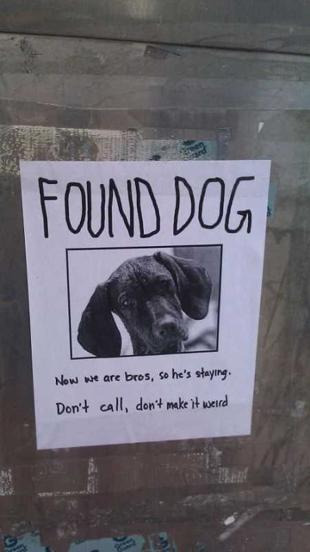funny found dog sign