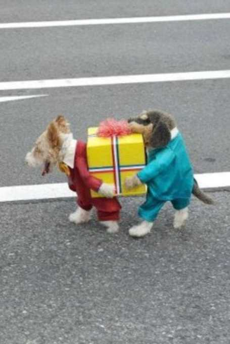 funny-little-dog-costume 28 Super Funny Pictures
