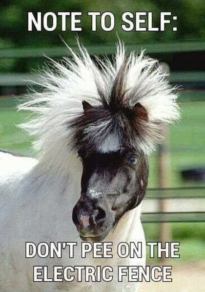 horse with crazy hair