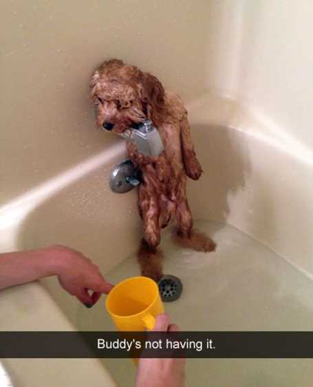 little-dog-getting-a-bath