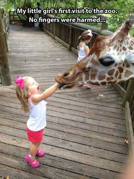 little-girl-feeding-a-giraffe