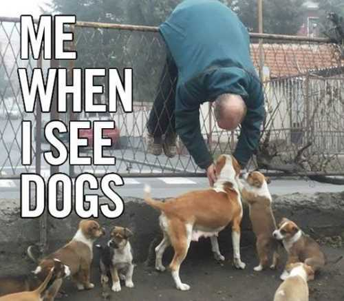 me-when-i-see-my-dogs