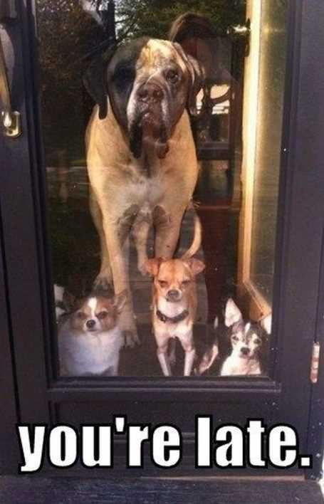 youre-late-dogs-waiting-by-door