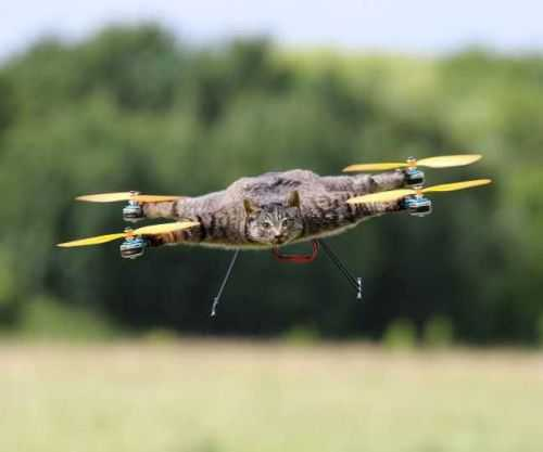Taxidermy Animal Drones - From Copter-Company 002