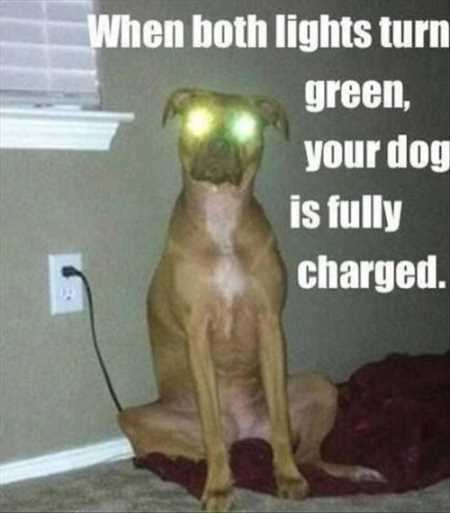 Image result for funny pet pics